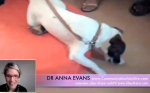 (FR) Communication Intuitive avec les animaux - Dr Anna Evans