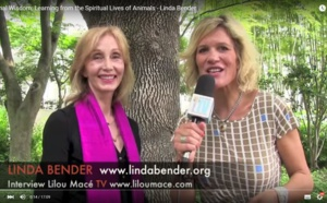 Animal Wisdom: Learning from the Spiritual Lives of Animals - Linda Bender